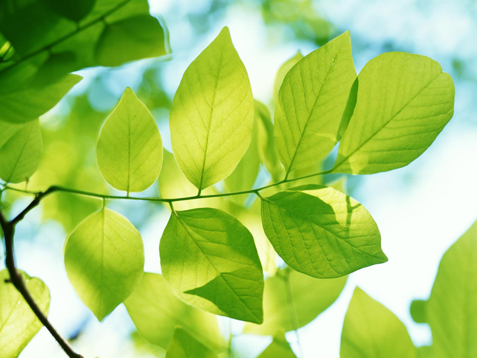 Песни 6070х Осенние листья  текст и слова песни в